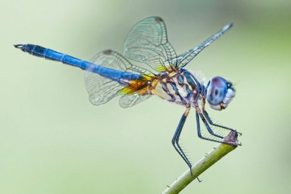 dragonfly-lead.jpg.696x0_q80_crop-smart